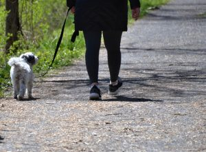 person in red jacket and black pants holding black dog leash